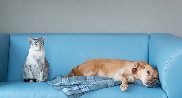 Tips To Protect Your Furniture from Pets Linen Store